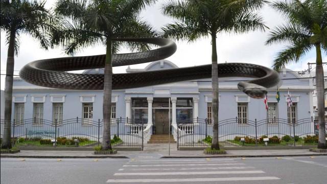 EXCLUSIVO: ATENTADO- Cobra é colocada no plenário da Câmara de Vereadores de Feira de Santana colocando em risco a vida dos vereadores